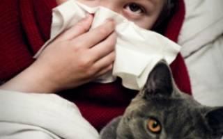 Может ли у ребенка быть аллергия на кошку