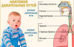 Кашель у ребенка по ночам без температуры лечение