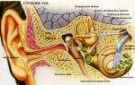 Отит среднего уха симптомы и лечение у ребенка 6 лет