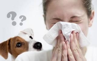 Аллергии на собак не бывает аллергии