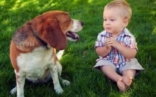 Могут ли глисты вызывать кашель у ребенка лечение